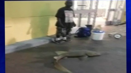 man selling live shark outside publix pkg_00000904.jpg