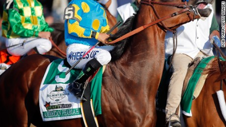 JUNE 06: American Pharoah #5, ridden by Victor Espinoza, is led to the starting gate during the 147th running of the Belmont Stakes at Belmont Park on June 6, 2015 in Elmont, New York. (Photo by Rob Carr/Getty Images)
