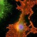 Science is beautiful brain cells