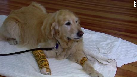 service dog hero pkg_00013124