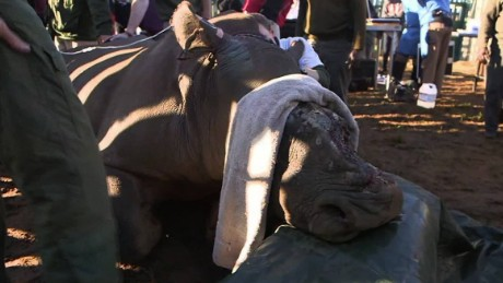saving hope the rhino magnay pkg_00011004.jpg