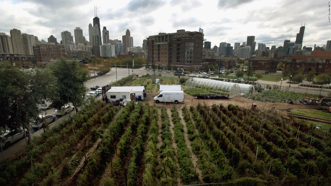 City Farm in Chicago