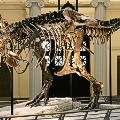 dino museums 2015-chicago