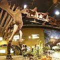 dino museums 2015-wyoming