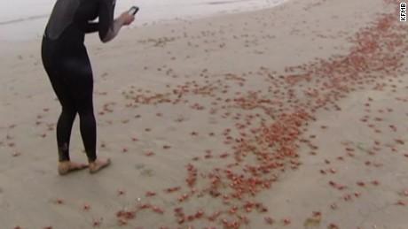 crabs beaches california dnt _00000524.jpg