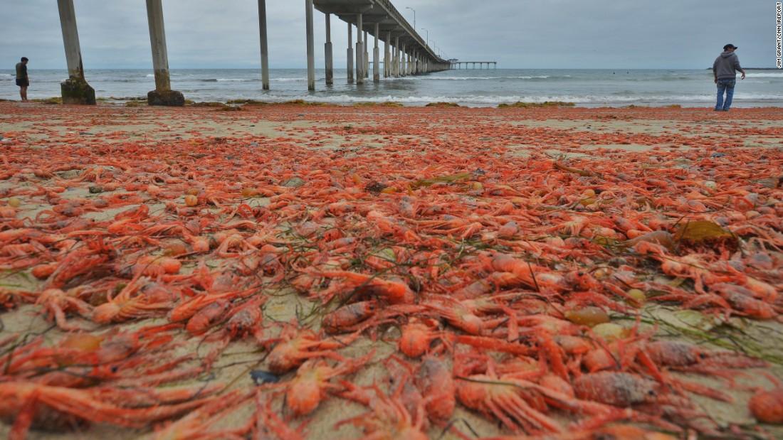 Warm Water Beaches In California