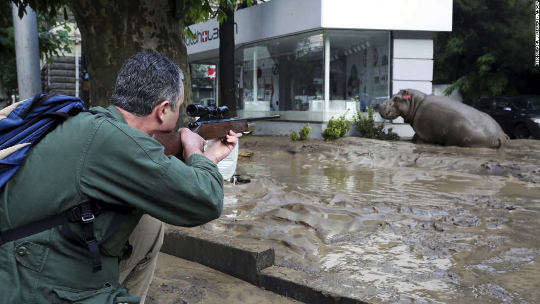 Escaped Tiger Kills Man in Tbilisi Georgia After Flood