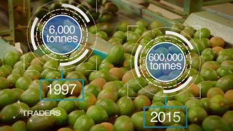 avocado industry mexico traders spc_00002505.jpg