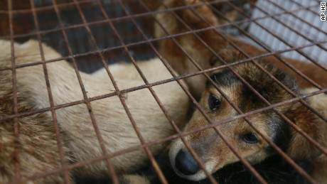 Dog Meat Dog in Cage