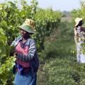 ehiopia wine 2