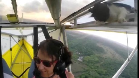 cnnee vo Cat stowaway in an airplane_00005620