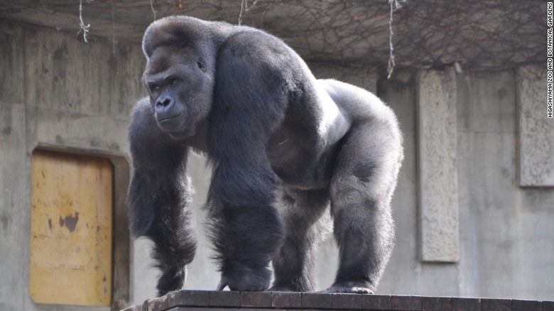 Zoo officials tell CNN that young women and families have been flocking to see the pretty primate.