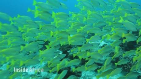 seychelles biodiversity inside africa b spc_00050813