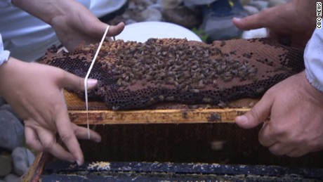50,000 honeybees removed from home pkg_00015205