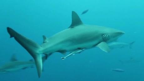 shark attack survivor patrick thornton sot_00011414