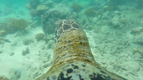 go pro turtle australia reef swimming orig_00010219
