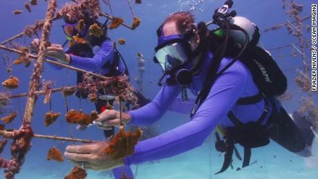 coral restoration foundation key largo gray orig mg_00021604.jpg