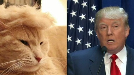 moos trump your cat meme erin_00000918
