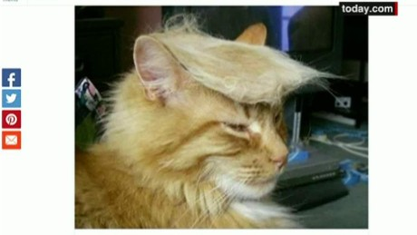 cnnee vo oraa cats with trump hair_00002326