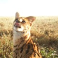 Snapshot serengeti animal selfies