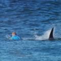 01 fanning shark attack