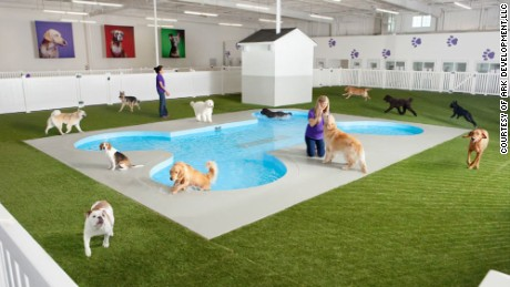 A new animal terminal is under construction at New York's John F. Kennedy International Airport. The Ark at JFK will include a Paradise 4 Paws pet resort featuring a bone-shaped swimming pool for dogs.