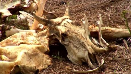 cnnee pkg gonzalez drought crisis in panama_00011620