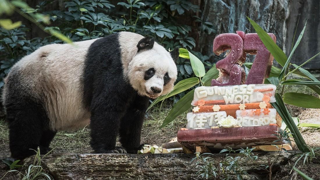 jia jia the panda