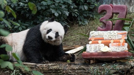 Meet the oldest panda in the world...