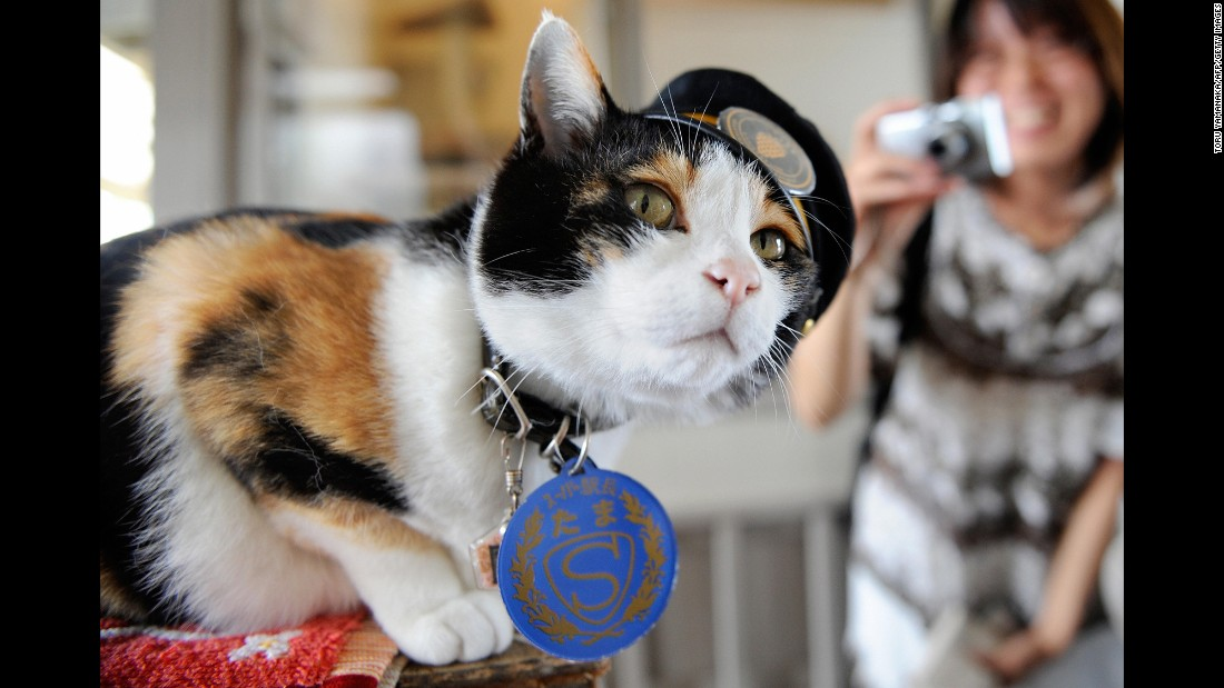 "Tama, a Japanese cat, became celebrated as the friendly stationmaster of the Kishi rail station in Kinokawa -- part of a railway line that she helped save from shutting down, thanks to her popularity, which brought in millions of dollars. Tama died on June 22 at the age of 16. Her funeral <a href=""http://www.theguardian.com/world/2015/jun/29/tama-the-cat-3000-attend-elaborate-funeral-for-japans-feline-stationmaster"" target=""_blank"">was attended by 3,000 people</a>."