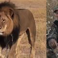 cecil lion hunter palmer split
