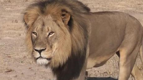 cnnee pkg valdes cecil the lion reax_00004107