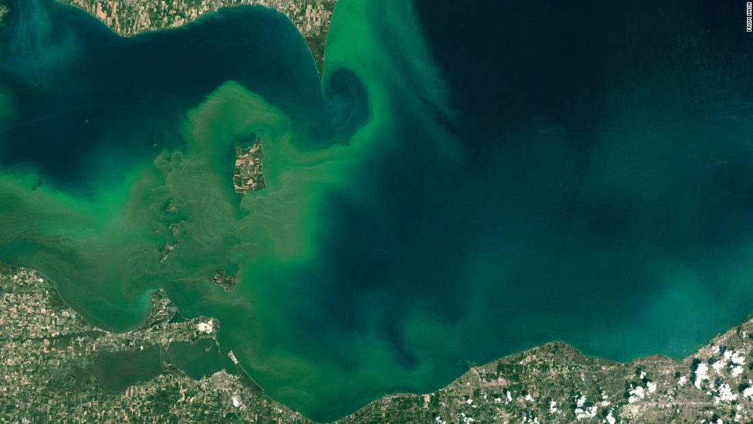 Algae blooms create swirls of green in western Lake Erie in this image taken July 28 by the Landsat 8 satellite. NOAA scientists predicted that the 2015 season for harmful algal blooms would be severe in western Lake Erie and possibly affect water safety. The blooms thrive when exposed to agricultural runoff, sunlight and warm temperatures.