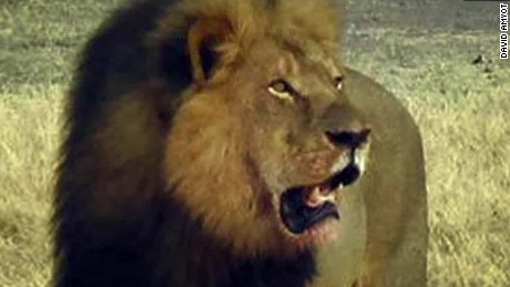 cecil the lions brother jericho shot dead in zimbabwe corwin intv nr_00010528