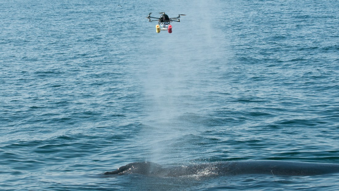 Researchers from the Woods Hole Oceanographic Institution and National Atmospheric Administration use a hexacopter to monitor whales in the Stellwagen Bank National Marine Sanctuary in the Massachusetts Bay. Besides photographing the whales, the hexacopter collects samples by swooping through their spouts.