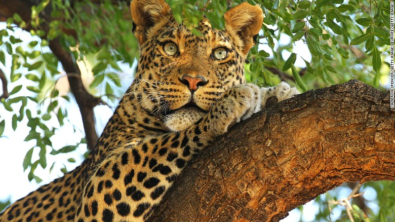 """Lonely Planet's """"Best in Travel 2016"""" is a roundup of hot destinations and experiences. Its top country recommendation for next year is Botswana, home to Mashatu Game Reserve."""