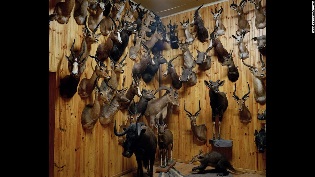 Taxidermist's studio No. 2, South Africa.