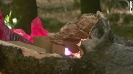 yosemite minors killed tree limb vo sot_00003902