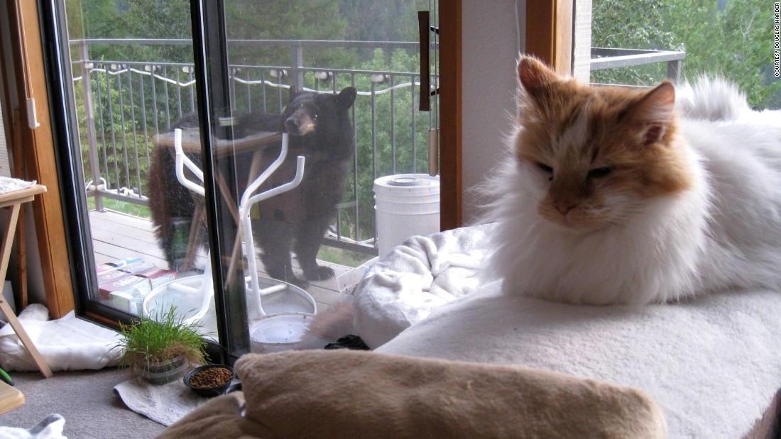 Harder's 11-year-old longhaired cat, Cujo, evidently was not fazed by the cub, either.