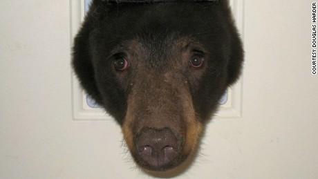 04.bear.IMG_3219.jpgjpg