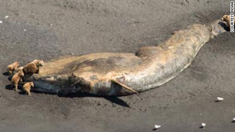 http://i2.cdn.turner.com/cnnnext/dam/assets/150821092537-alaska-whale-deaths-large-169.jpg