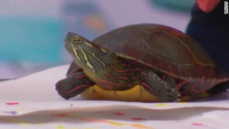 craft turtle pet store carbonaro effect _00022513