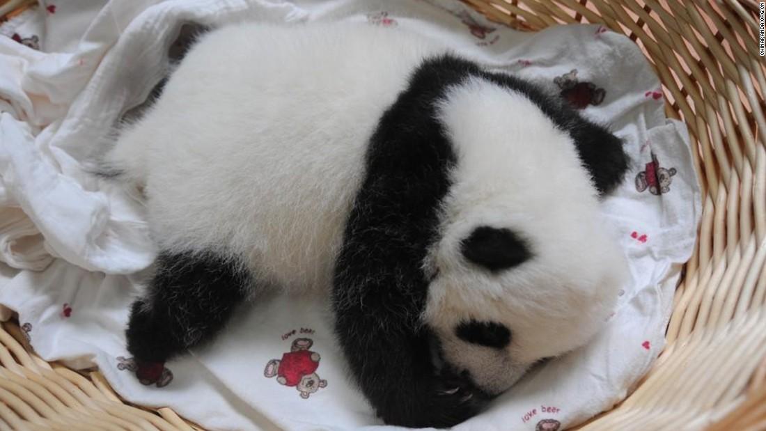 A cub lies in a basket.