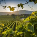 1. Wine regions Franciacorta Italy