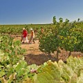 5. Wine regions - Swartland