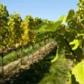 6. Wine regions Tasmania