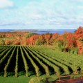 wine regions Michigan
