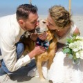 01 Dog terminal cancer wedding