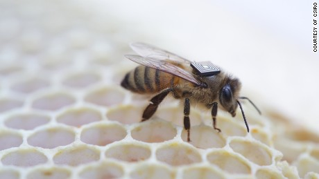 Researchers combat bee decline with tiny trackers - CNN.com