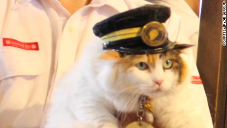 Meet Nitama, the new cat in charge at Japan's Kishi Station